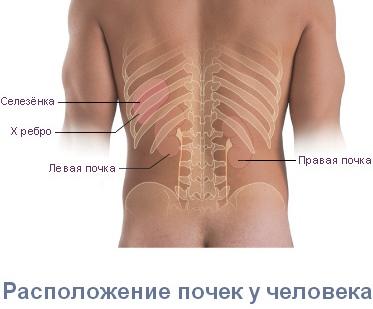 Изображение 4: Болит поясница - клиники АО Семейный доктор
