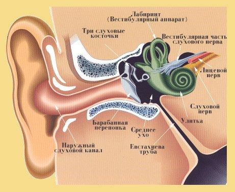 Изображение 2: Шум в ушах - клиника Семейный доктор