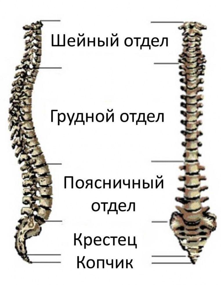 Снимок шейно грудного отдела позвоночника